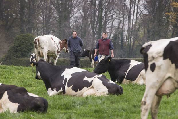 Why the Guinness clan has called time on dairying