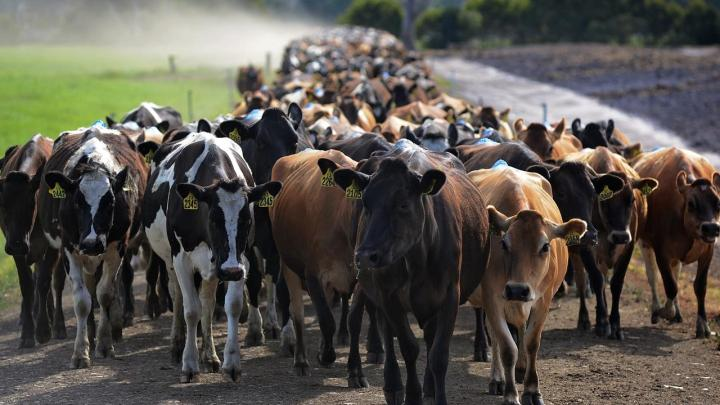 Supply drop, import rise hurting dairy