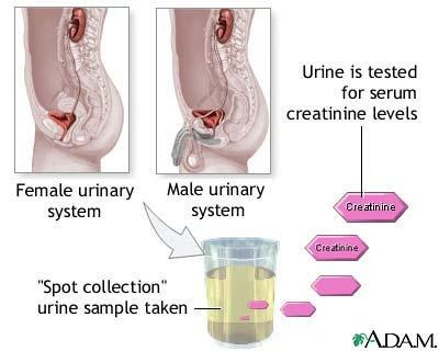 Effect On Baby By Pus Cells In Urine During Pregnancy Answers On