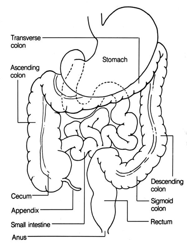 wiringpi terminal ileum