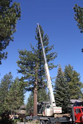 crane lowering tree
