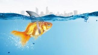 little fish in big sea
