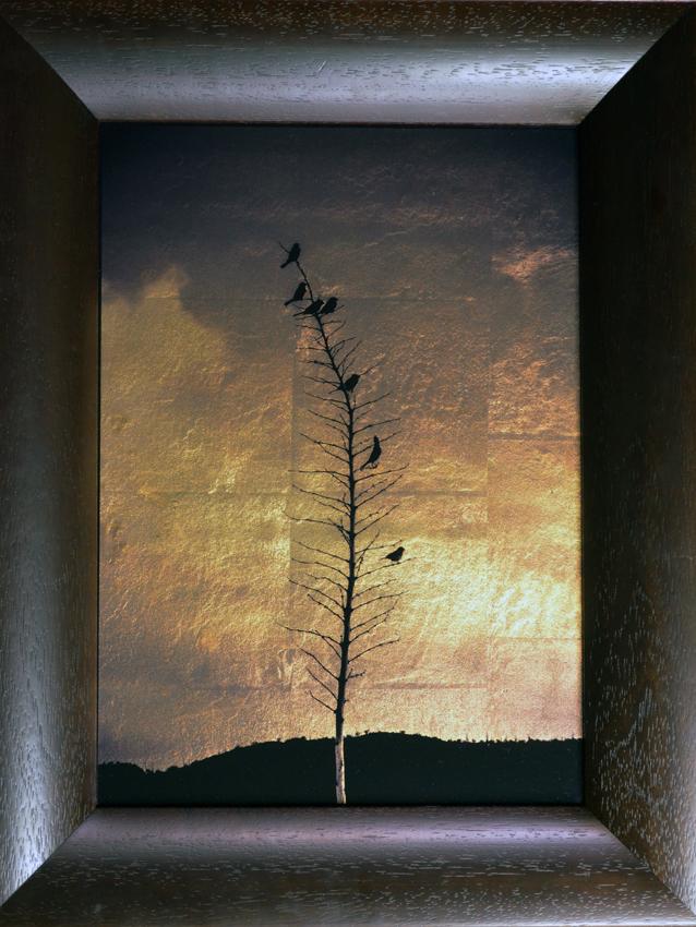 Seven Finches on Yukka, 2014 - 2105 © Kate Breakey