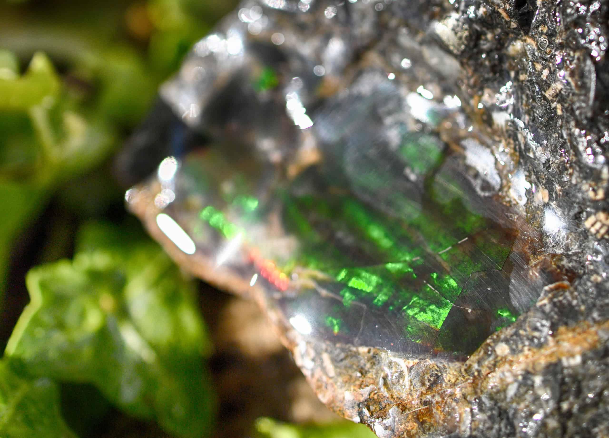 emerald green alpine ammolite