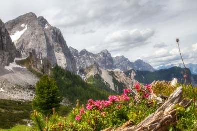 alpine roses and Summits