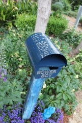 bower-boy-poem-part-of-a-posy-of-poems-kirli-saunders