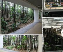 Black Bamboo Carpark