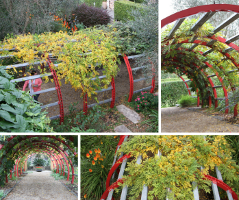 The Rose Arbour