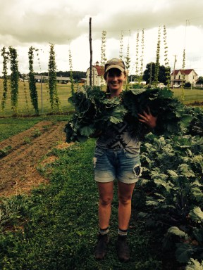 Shauna harvesting some Red Russian Kale for campus dining.