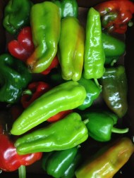 Peppers for the Harvest Dinner this Saturday at Eden Hall!