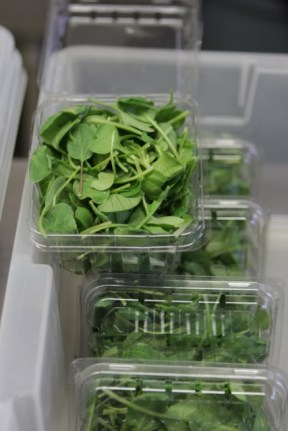 Radish greens were put into clam shell cases.