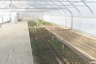 Seedlings taking root in the solar high tunnel.