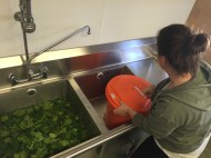 Cassandra Malis washes and dries spinach