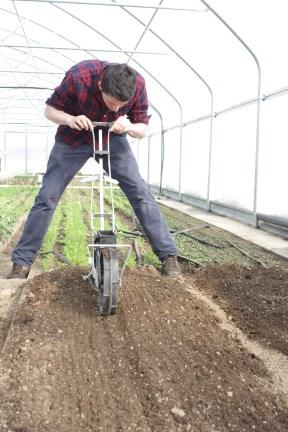 seeding snow peas