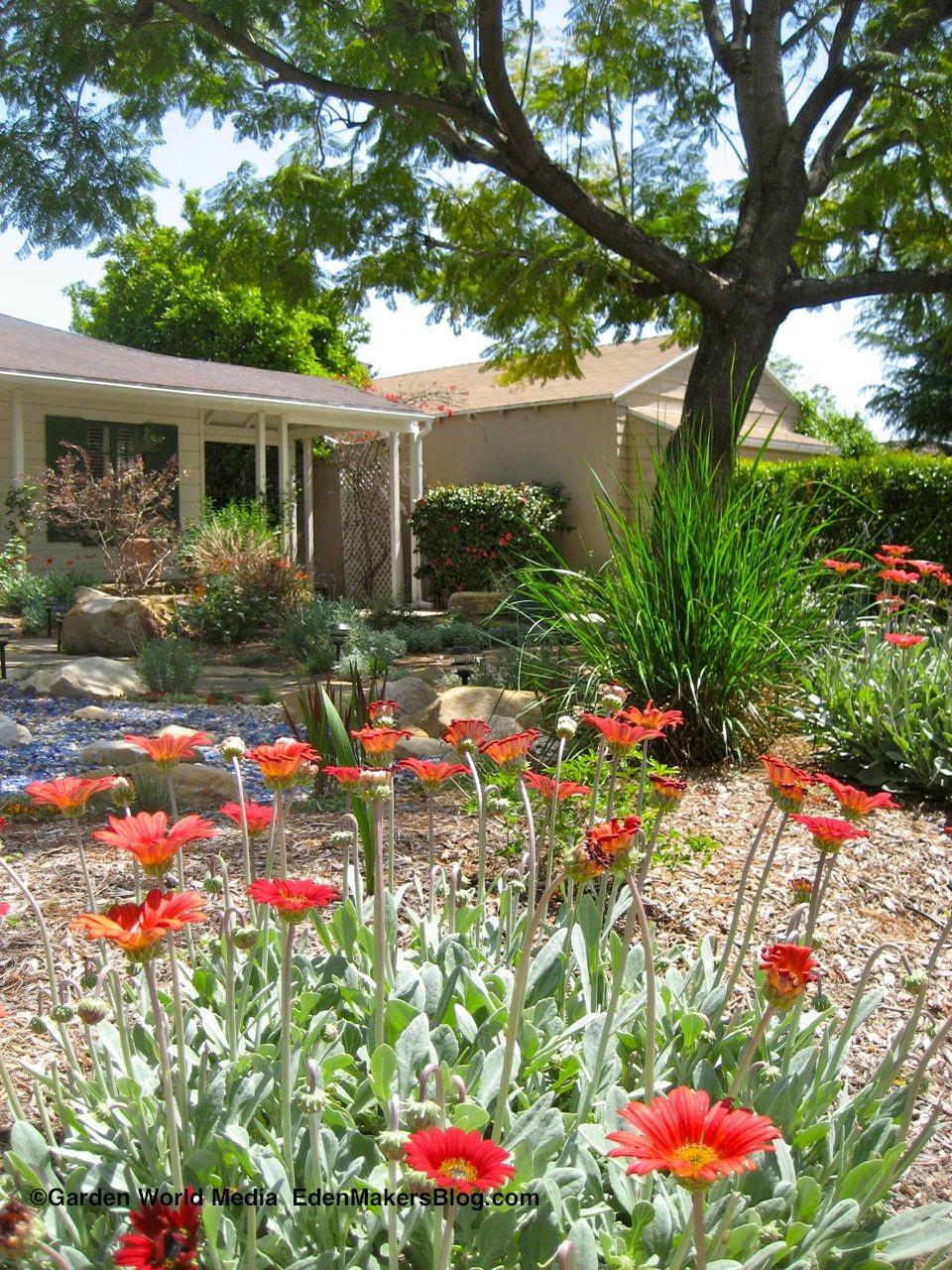 Water Wise Gallery Garden Design | Designmore