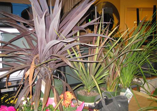 monrovia-plants.jpg