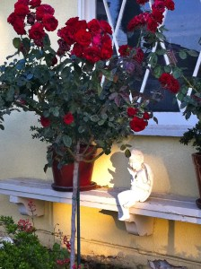 Tree rose-red Europeana