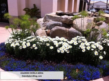 Lobelia, Leucanthemum and papayrus garden bed