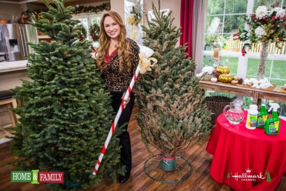 Tips For Keeping Your Christmas Tree Fresh | Eden Makers ...