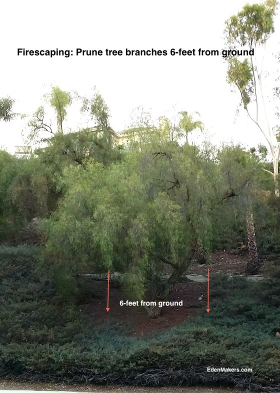 firescaping-prune-tree-branches-6-feet-from-ground-edenmakers.com