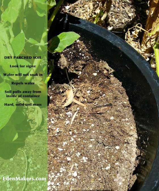 dry-parched-soil-in-container-edenmakers