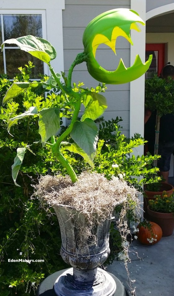 Man-Eating-Monster-Plant-For-Halloween-Shirley-Bovshow-Home-and-Family-Show