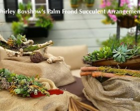 shirley-bovshow-succulent-pond-frond-container-arrangements-edenmakers-blog