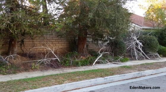 foraged-birch-tree-branches-edenmakers-blog