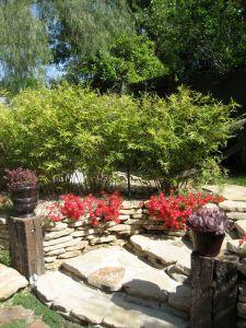 golden goddess bamboo hedge