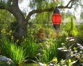 California pepper tree with red lantern at Shirley Bovshow home