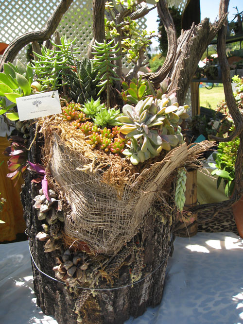 Succulent Planters Would You Believe Palm Fronds Eden