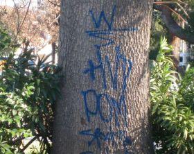 graffiti on a tree