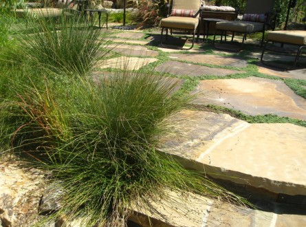FOLIAGE AND TEXTURE OF DEER GRASS NEAR POOL