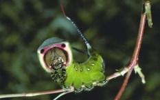 caterpillar6