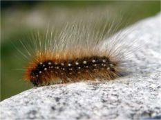 caterpillar9
