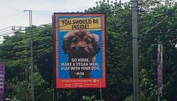 "PETA's ""You should be inside"" billboard"