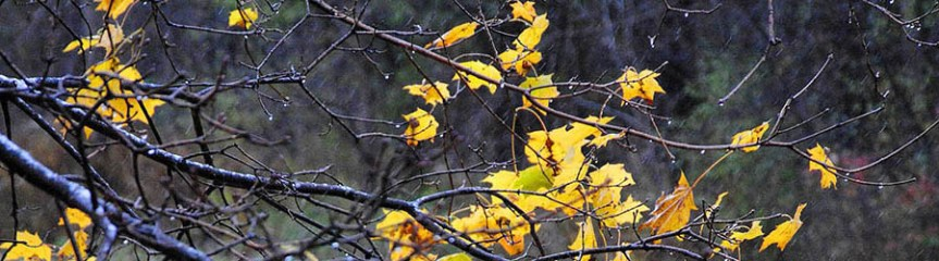 Banner - Yellow leaves, few, do hang - Sonnet 73 rewriting limerick