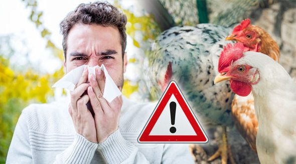 Avian influenza is known as Bird flu