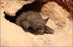 bats (WinCE)