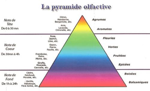 comment choisir son parfum à l'aide de la pyramide olfactive