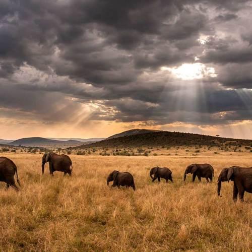 Paysage du Kenya