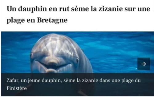 Top 10 instagram dauphin