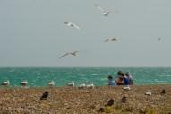 Un familia disfruta de su almuerzo en la playa, mientras gaviotas y cuervos esperan para competir por alguna eventual sobra de comida que se quede en el sitio.