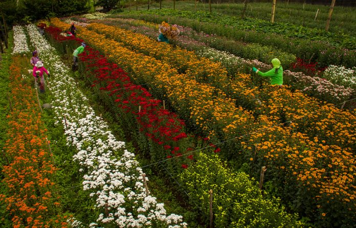 Image result for puentespina garden davao