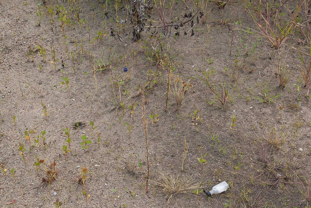 Jennifer Colten, Wasteland Ecology 9021. Click to enlarge.