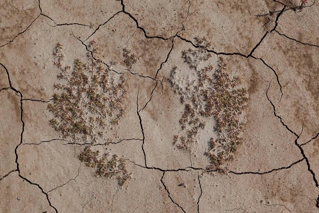 Jennifer Colten, Wasteland Ecology 9522. Click to enlarge.