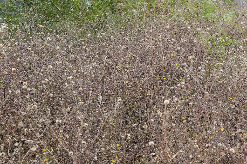 Jennifer Colten, Wasteland Ecology 9688. Click to enlarge.