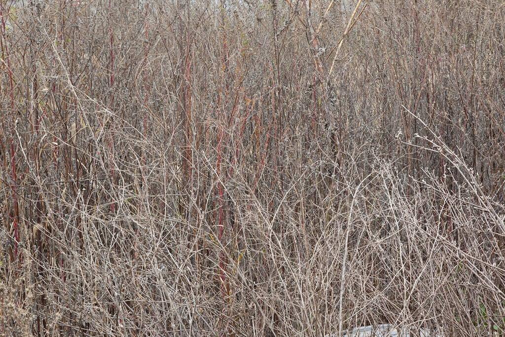 Jennifer Colten, Wasteland Ecology 9724. Click to enlarge.