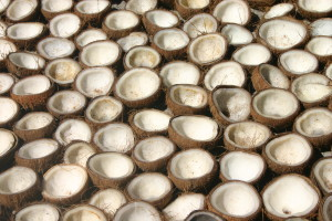 Coconuts drying before being processed into copra. Image courtesy of wikimedia commons. CC BY 2.0.