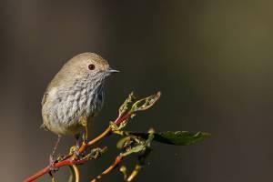 Female Birds Sing, Too